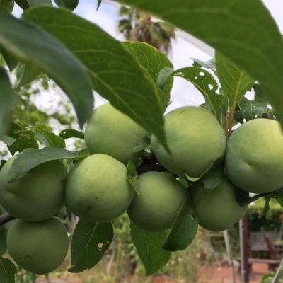 Feeding America, Gleaning and Healing