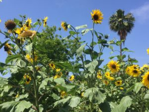 Free Permaculture Course