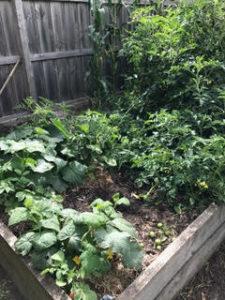garden with edible greens