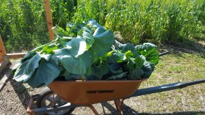 backyard farming greens