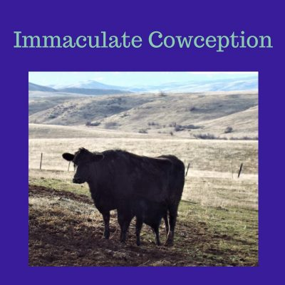 Immaculate Cowception