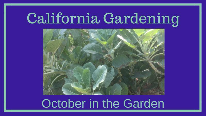 California Gardening